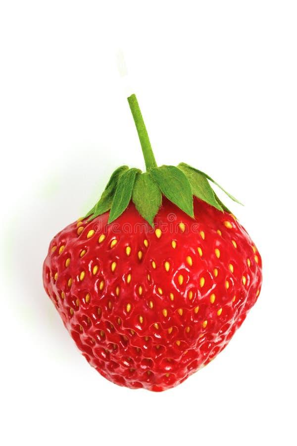 Elemento Berry Strawberry Isolated maduro do projeto no fundo branco fotos de stock