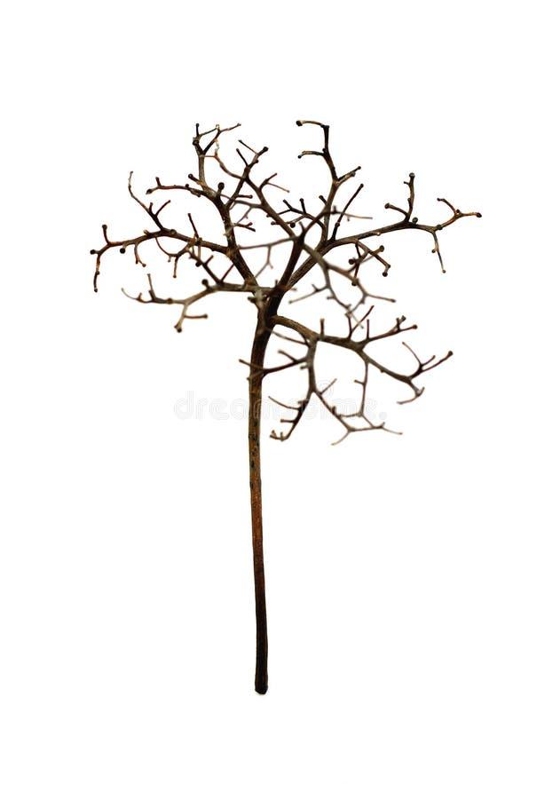 Elemento botânico foto de stock royalty free