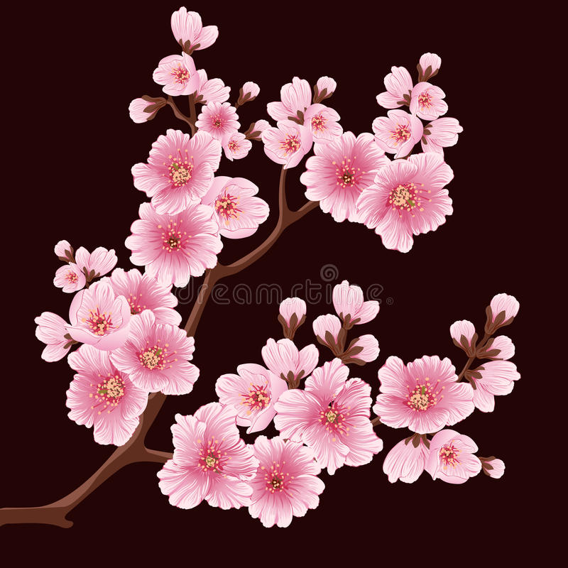 Elemento de la rama de la flor de Sakura del vector Elemento elegante para su diseño Cherry Blossom ilustración del vector