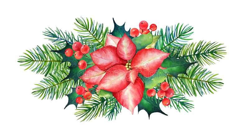 Elemento decorativo di Natale con il fiore della stella di Natale dell'acquerello, illustrazione vettoriale