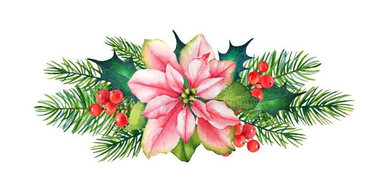 Elemento decorativo di Natale con il fiore della stella di Natale dell'acquerello, l'agrifoglio con le bacche ed il pino illustrazione di stock