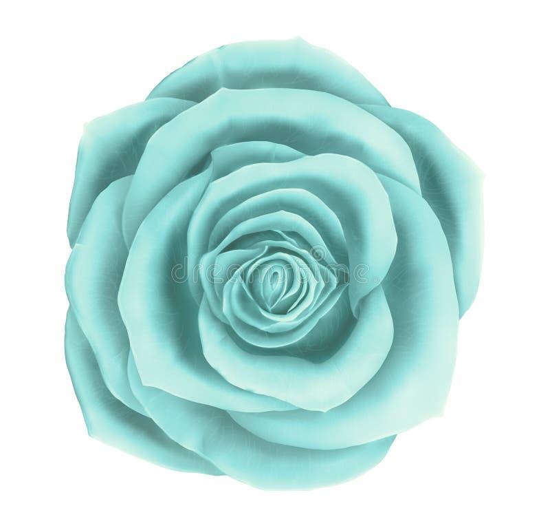 Elemento decorativo floreale della bella rosa del blu di vettore illustrazione di stock