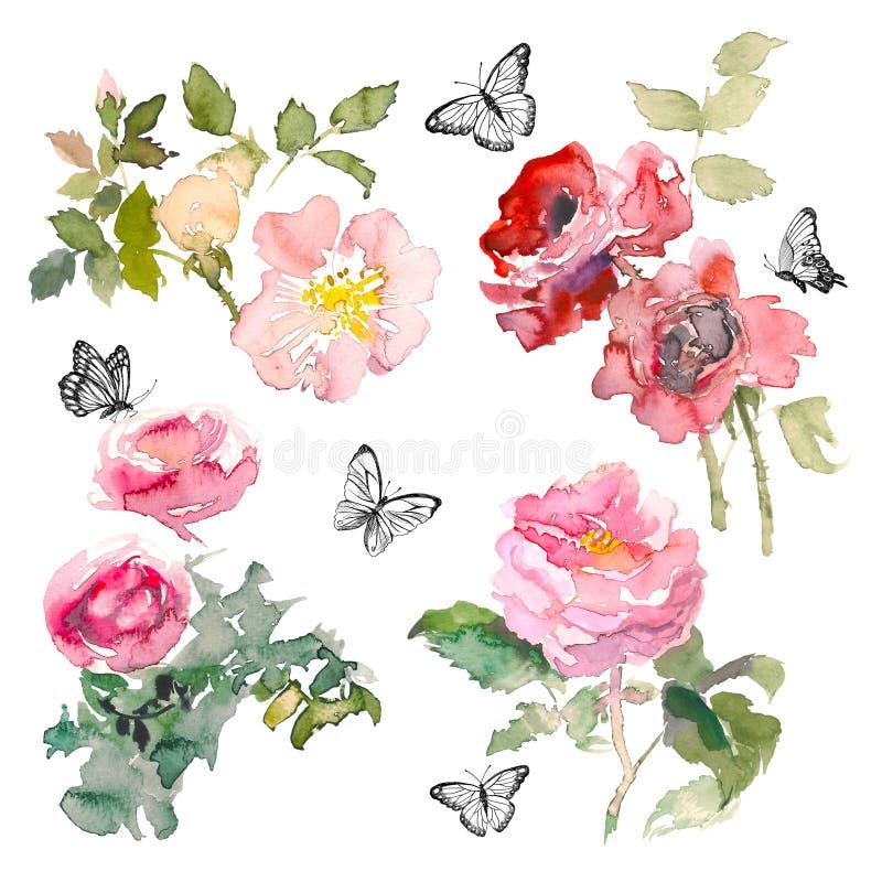 Elemento dell'acquerello delle rose e delle foglie verdi del giardino con la farfalla sui precedenti bianchi Giardino romantico d royalty illustrazione gratis