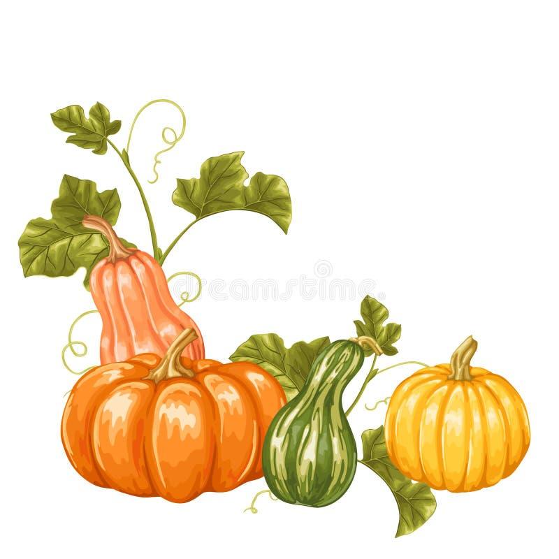 Elemento di progettazione con le zucche Ornamento decorativo dalle verdure e dalle foglie illustrazione di stock