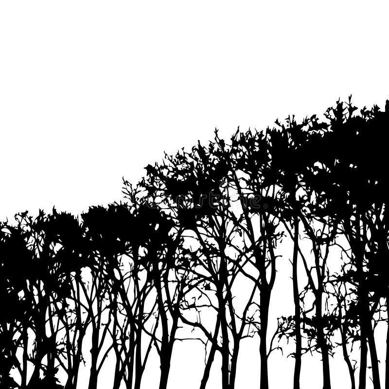 Elemento di progettazione delle siluette degli alti alberi in bianco e nero di vettore illustrazione di stock