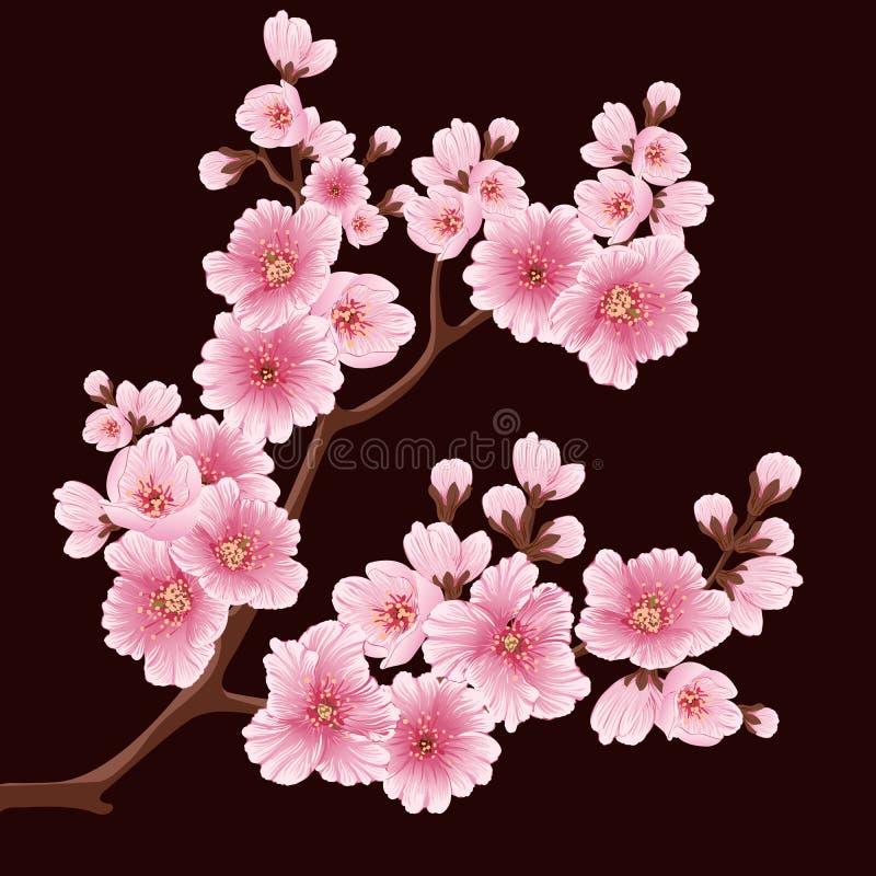 Elemento do ramo da flor de sakura do vetor Elemento elegante para seu projeto Cherry Blossom ilustração do vetor