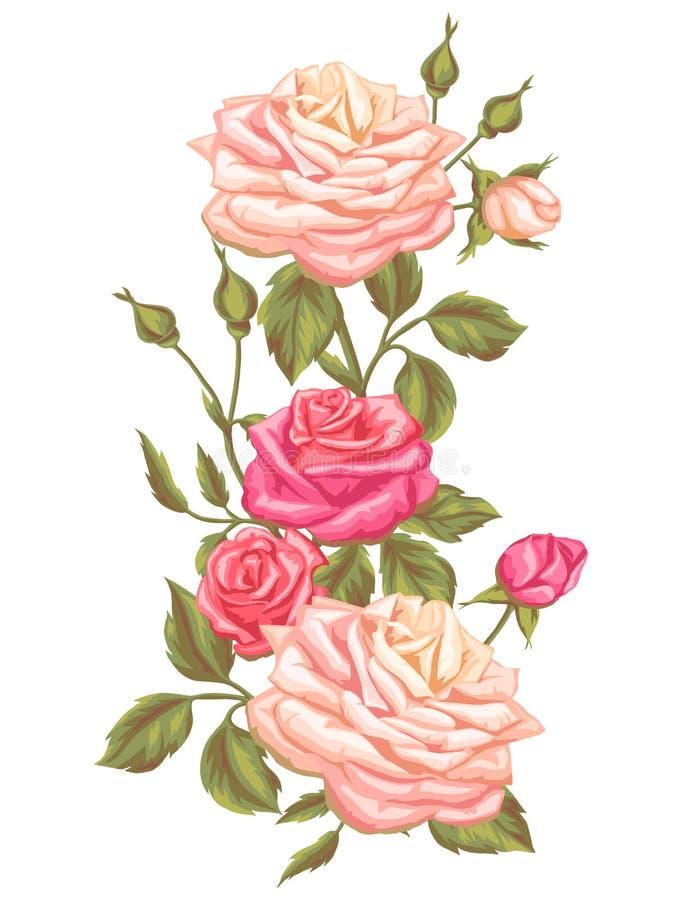 Elemento floral com rosas do vintage Flores retros decorativas Imagem para convites do casamento, cartões românticos, brochuras ilustração royalty free
