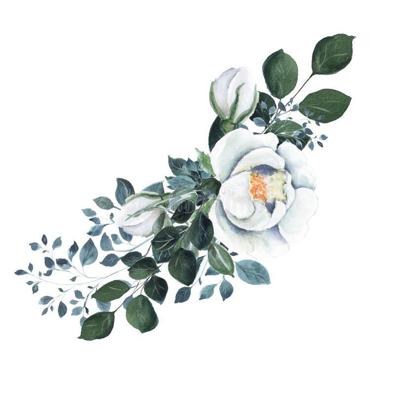 Elemento floral da aquarela com galhos verdes, flores brancas do rosehip ilustração do vetor
