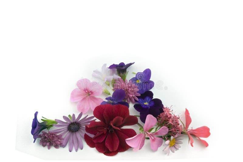 Elemento floral del diseño del fondo imagen de archivo libre de regalías