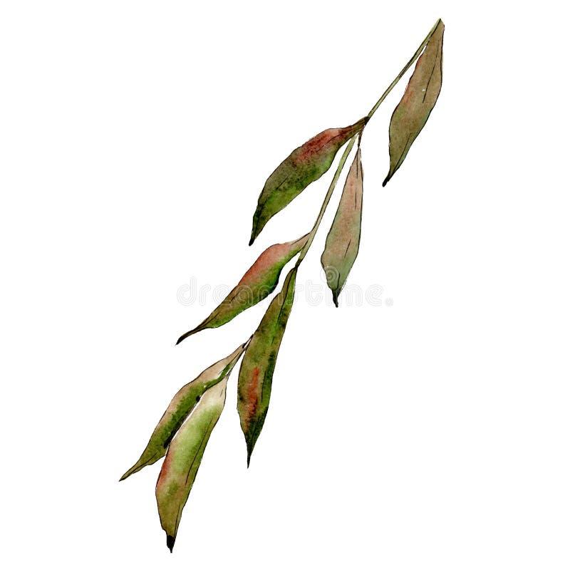 Elemento isolado da ilustração dos ramos do salgueiro Grupo da ilustração do fundo da aquarela folha verde ilustração do vetor