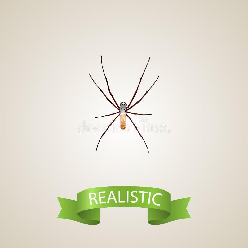 Elemento realistico dell'aracnide Illustrazione di vettore del ragno realistico isolata su fondo pulito Può essere usato come rag illustrazione vettoriale