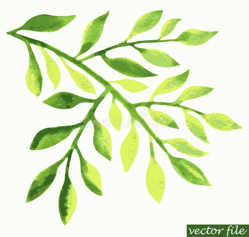 Elemento verde do projeto da folha da aquarela ilustração do vetor