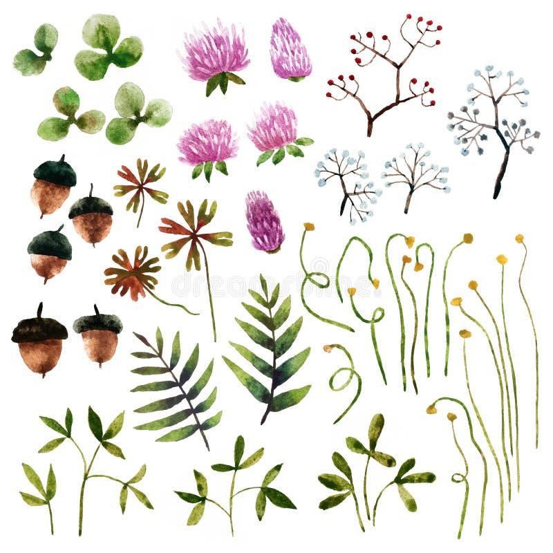 Elementos botánicos de la acuarela stock de ilustración