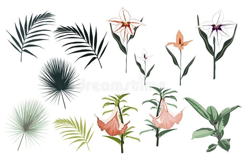 Elementos botânicos do vetor: elastica do ficus, lírios tropicais, flores da orquídea e folhas de palmeira ilustração royalty free