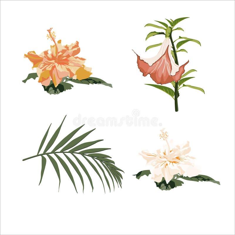 Elementos botânicos do vetor: hibiscus e flores e folhas de palmeira tropicais dos lírios ilustração do vetor