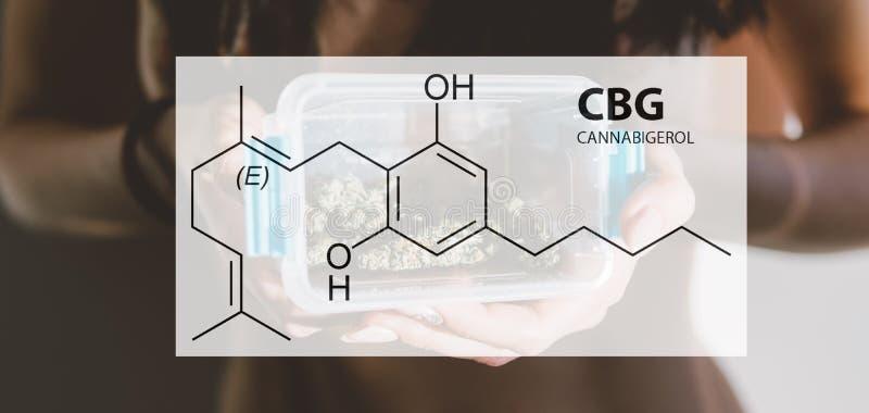 Elementos da cura de CBG em flores da marijuana Cabbabis médicos nos detalhes imagens de stock