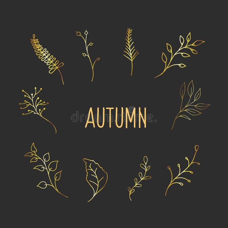 Elementos de design Gold Botanic. Desenhos de plantas no estilo do rabisco. Decoração do vetor de outono ilustração do vetor