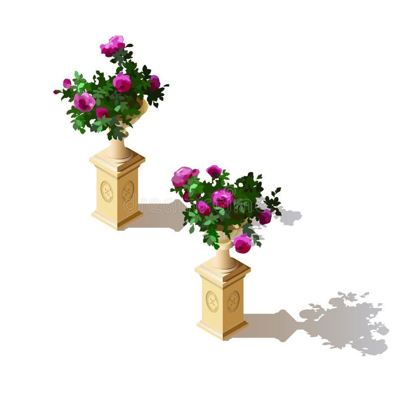 Elementos de la decoración Arbustos de la floración de las rosas en macetas ilustración del vector
