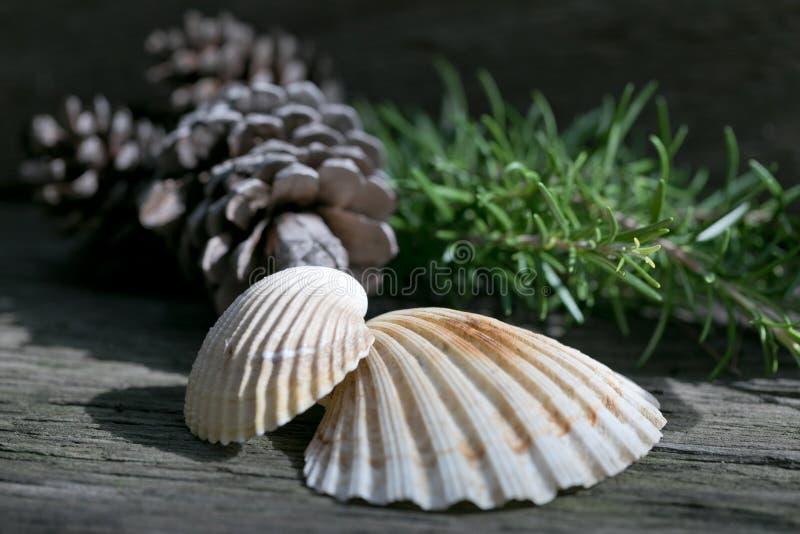 Elementos decorativos da natureza em um fundo de madeira foto de stock royalty free