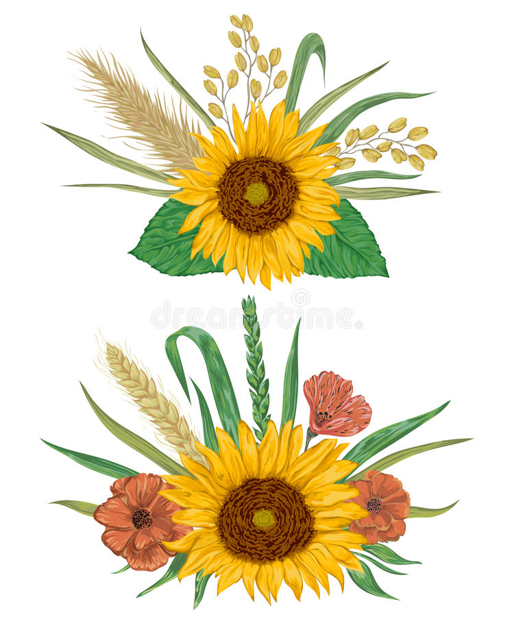Elementos decorativos do design floral da coleção Girassol, cevada, trigo, centeio, arroz, papoila ilustração royalty free