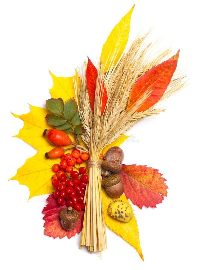 Elementos del otoño foto de archivo