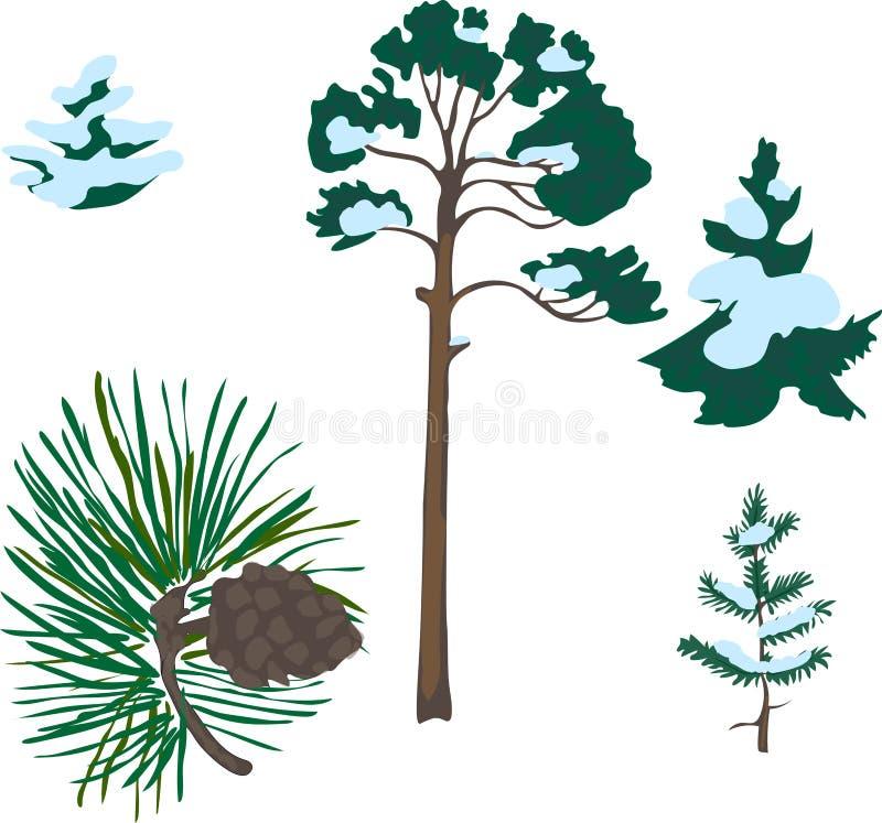 Elementos del pino fotos de archivo