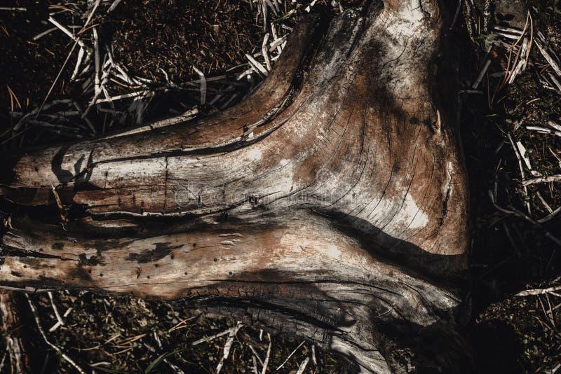 Elementos desecados, blancos de la madera muerta Motivo de madera, natural imágenes de archivo libres de regalías