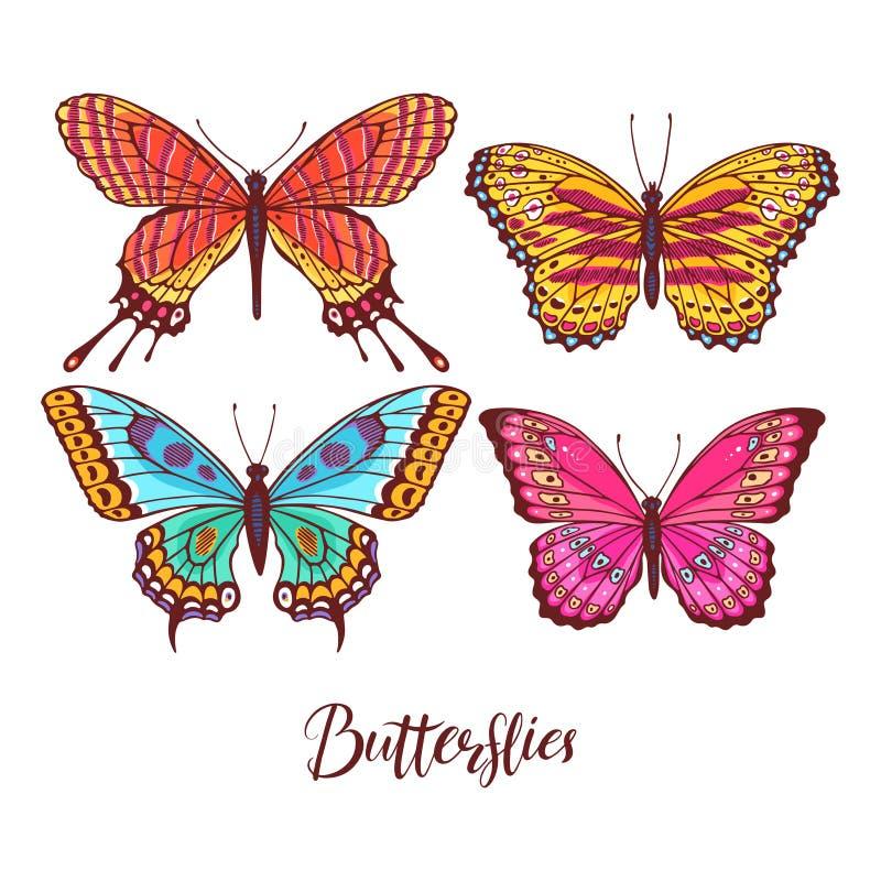Elementos detalhados da borboleta ilustração royalty free