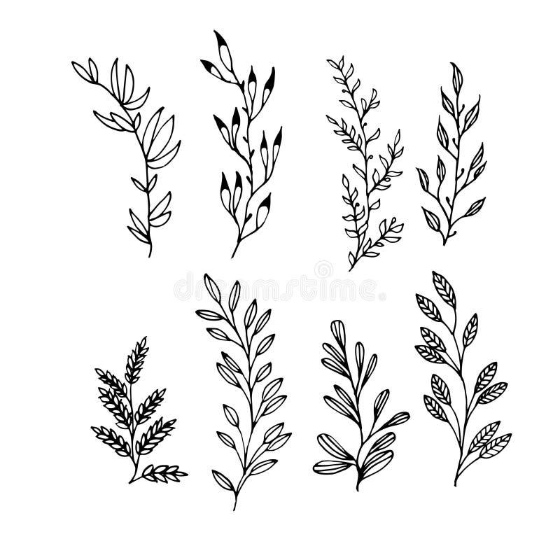 Elementos exhaustos de la mano floral determinada para los marcos ilustración del vector
