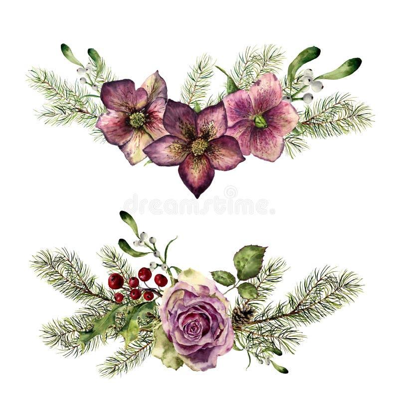 Elementos florais do inverno da aquarela com o abeto isolado no fundo branco Estilo do vintage ajustado com ramos de árvore do Na ilustração royalty free