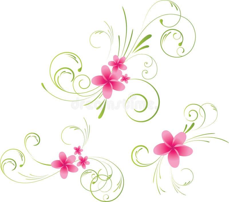 Elementos florais do Plumeria ilustração royalty free