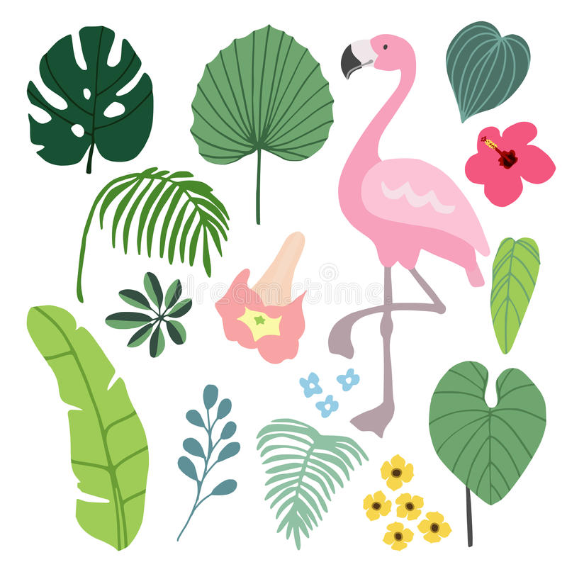 Elementos gráficos tropicales del verano con el pájaro del flamenco Ejemplos de la selva, palma y hojas e hibisco florales del mo libre illustration
