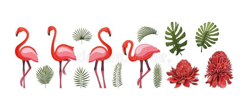 Elementos gráficos tropicales del verano con el pájaro del flamenco Vectores comunes aislados imagen de archivo