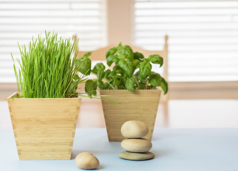 Elementos naturais na casa para o equilíbrio e o bem estar foto de stock royalty free