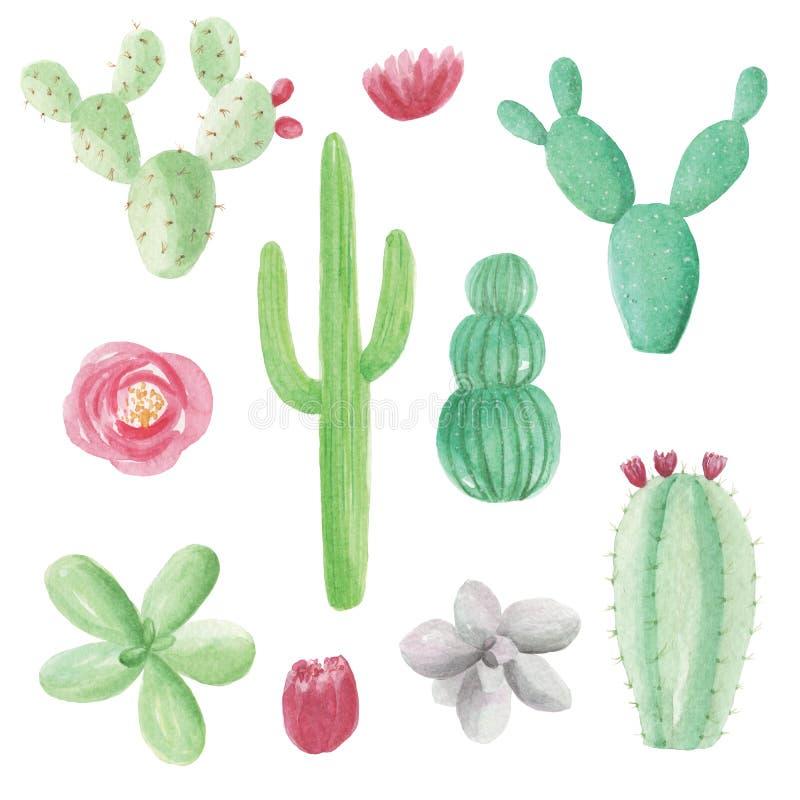 Elementos pintados à mão da flor dos cactos da aquarela das plantas carnudas do cacto ilustração royalty free