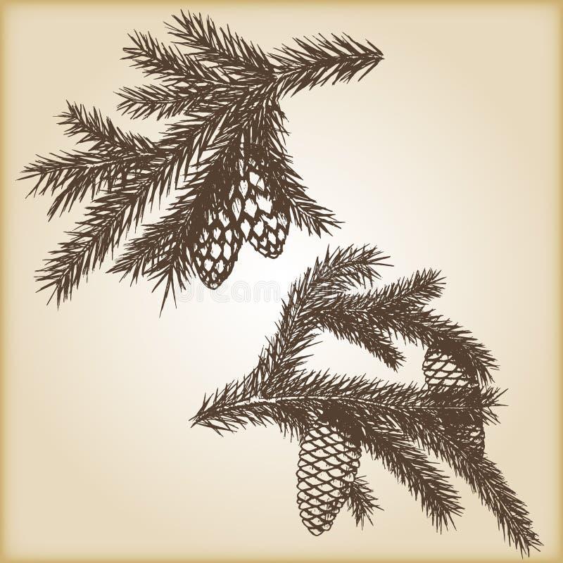 Elementos rústicos dibujados mano del vector del diseño del vintage Colección del bosque de ramas y de conos coníferos del pino e libre illustration