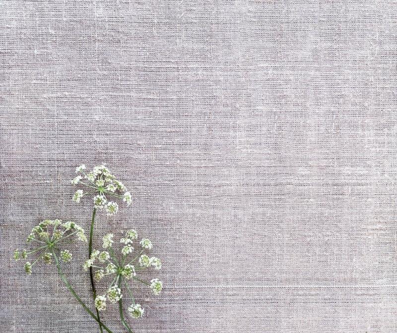 Elementos secados da flor com sombra em claro - textura marrom do tecido de algodão Fundo da lona foto de stock