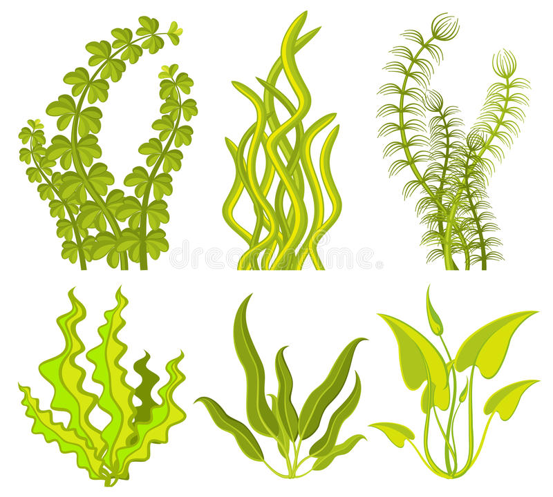 Elementos subaquáticos do vetor da alga ilustração royalty free