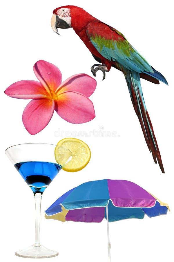 Elementos tropicais ilustração royalty free