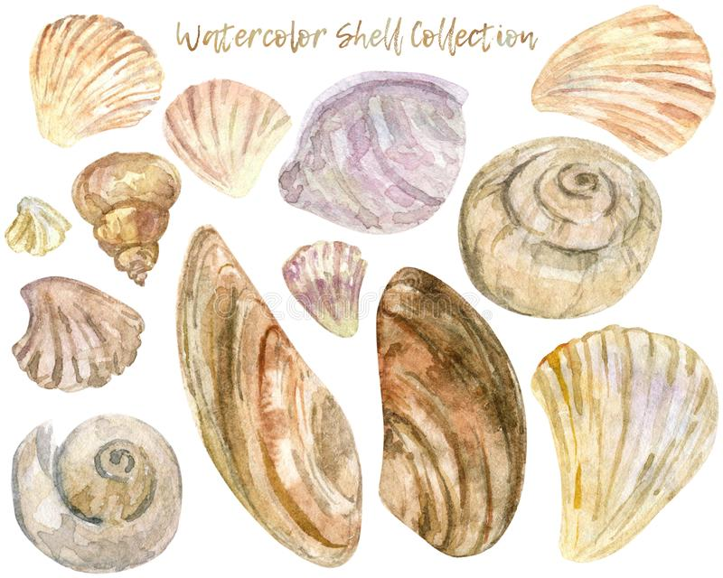 Watercolor shell clip art collection vector illustration