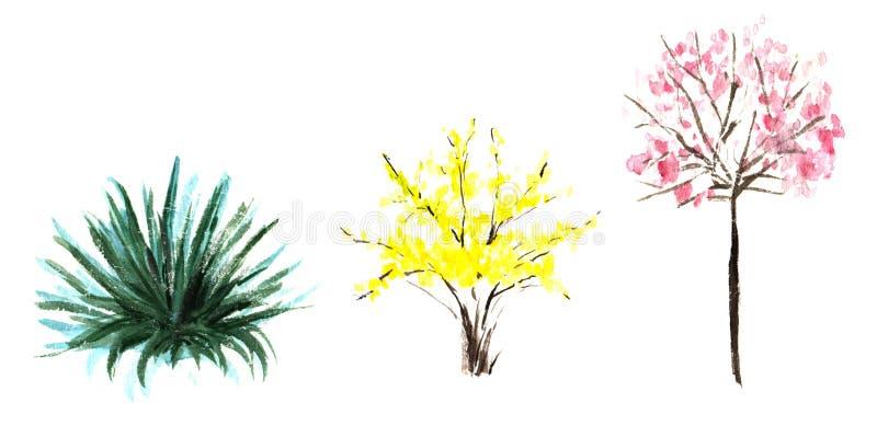 elementy dekoracyjni od?ogowanie Ogrodowe thermophilic kwiatonośne rośliny, kwiaty i krzaki, Stubarwne korony żółta zieleń, mench ilustracji