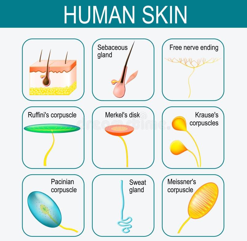 Elementy ludzka skóra ustawić symbole royalty ilustracja