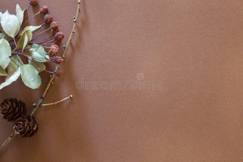 Elementy roślina na brown tle zdjęcie stock