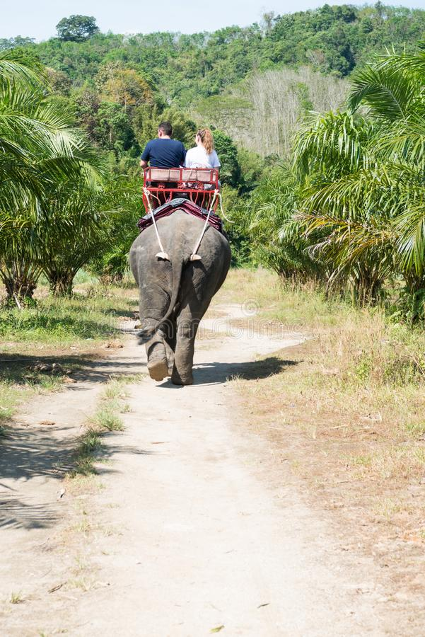 Elephant riding by tourists in tropical green palms and trees. Tourists are riding an elephant in tropical green fields with palms trees in Thailand stock photo