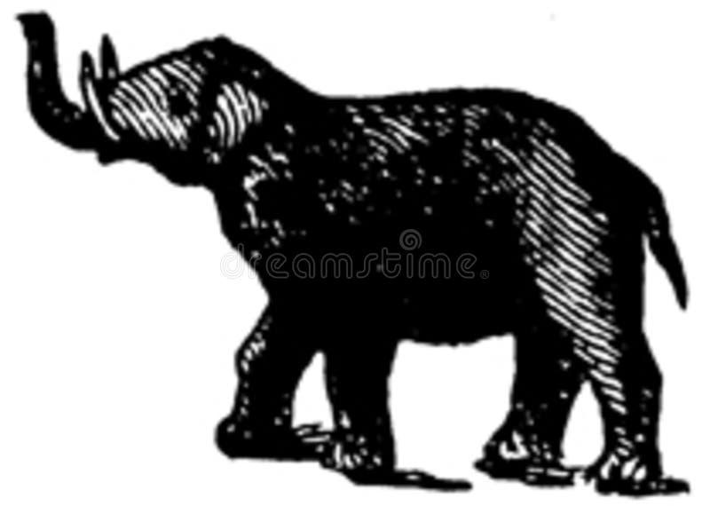Elephant-010 Free Public Domain Cc0 Image