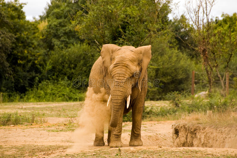 Download Elephant Stock Images - Image: 10548514
