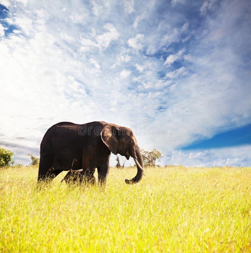 Download Elephant stock image. Image of tusk, holiday, savannah - 13224727
