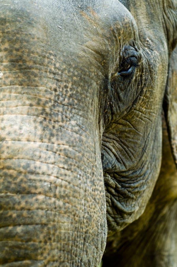 Free Elephant Royalty Free Stock Image - 1337446