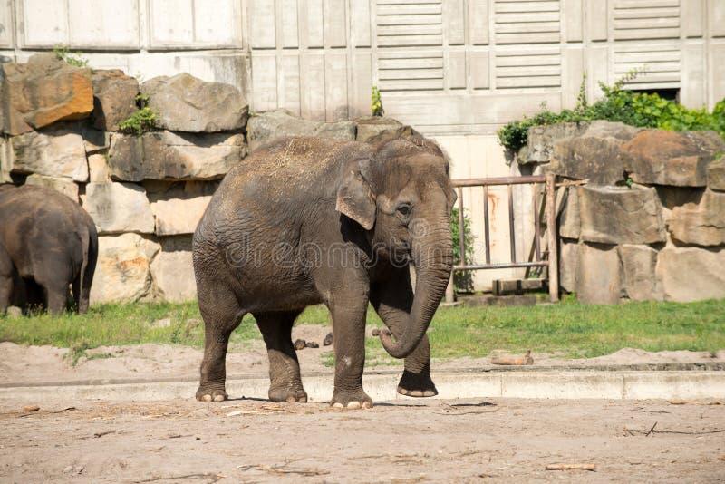Download Elephant stock photo. Image of background, germany, skin - 26349440