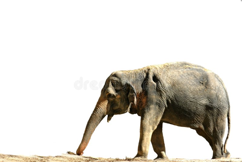 Download Elephant Stock Photography - Image: 37792